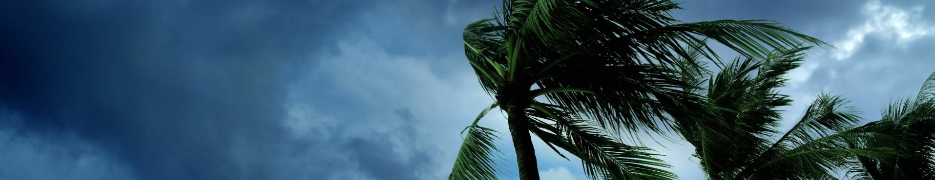 Palm trees blowing in a storm | Shine Lawyers
